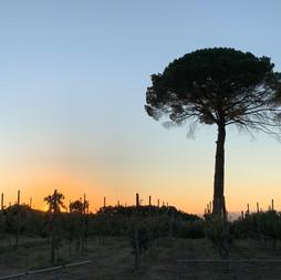 Sonnenuntergang-bei-Fiorentino-mit-Pinie
