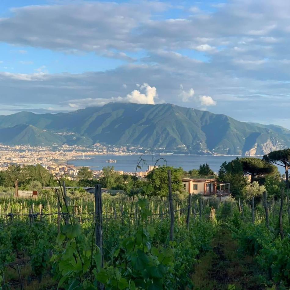 Sicht-vom-Weingut-Casa-Stetaro-auf-den-G