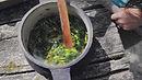 Pflanzenkunde und Wildkräuterküche, (BASIS-MODUL)