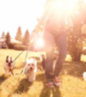 Dog Walking on a Sunny Day_edited.jpg