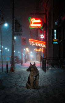 Winter Storm Dog