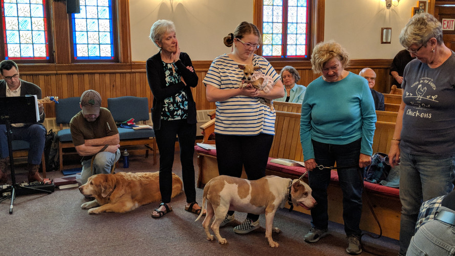 Blessings during Blessing of Animals at