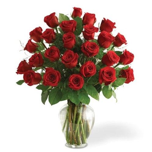 LONG STEM PREMIUM TWO DOZEN RED ROSES