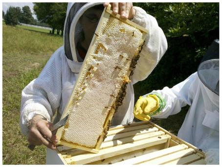 Kraj pomůže více než dvaceti začínajícím včelařům