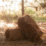 straw2 bales.jpg