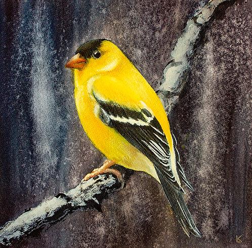 Original   Golden Finch