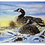 Thumbnail: Greeting Cards - Winter Snowy Geese