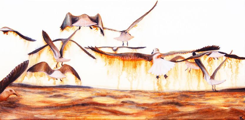 Tyler's Seagulls