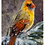 Thumbnail: Greeting Cards - Winter Snowy Cardinal