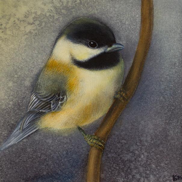 Chickadee Portrait