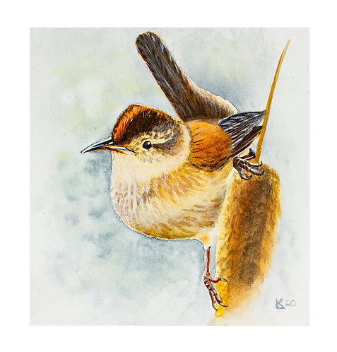 Original | Marsh Wren
