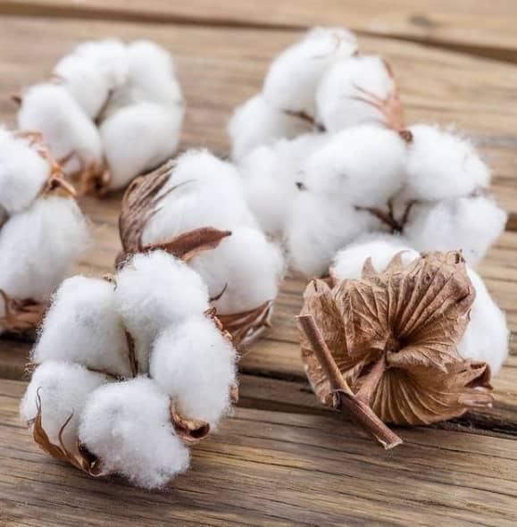 Fleurs de coton paris francce