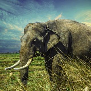 100-elephant-2729415.jpg