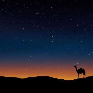 122-camel-163703.jpg