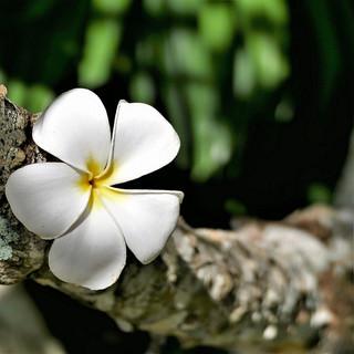 101-flower-3149072.jpg