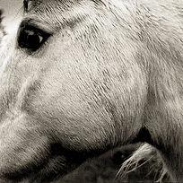 BONNY LIGHT HORSEMAN_same_COVER.jpg