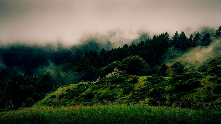 Fog and Nature_edited_edited.jpg