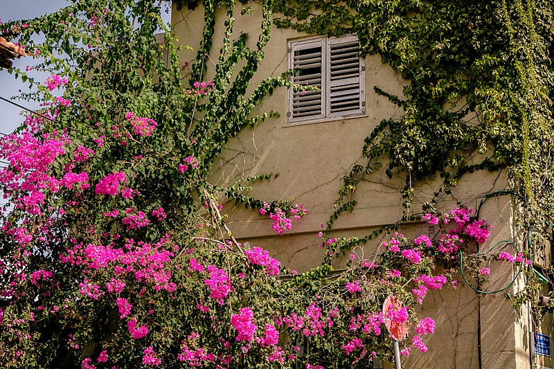 Der Charme eines Viertels hinter den lebendigen, belebten Straßen des südlichen Tel Avivs versteckt, war das Gebiet von Neve Tzedek die erste organisierte jüdische Siedlung, die außerhalb Jaffas gebaut wurde.