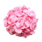 Preserved Pink Rose Petals