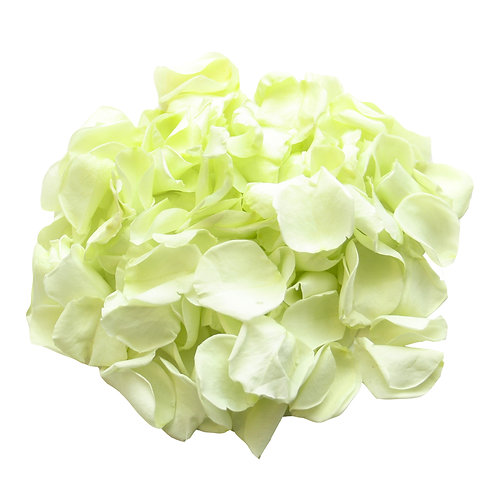 MINT GREEN ROSE PETALS