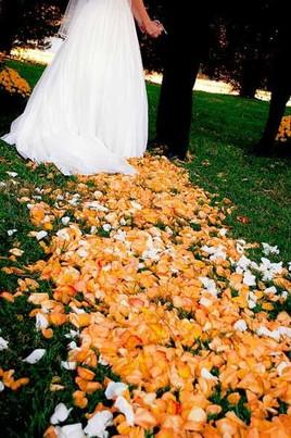 Orange Rose Petal Aisle