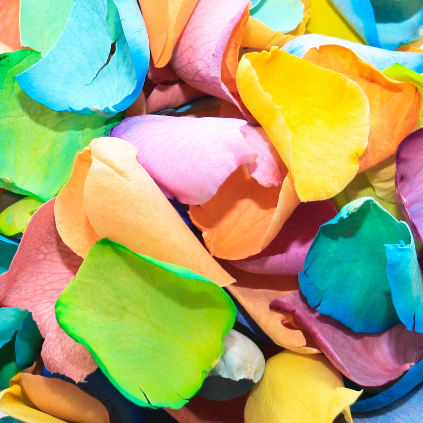 rainbow roses biodegradable petals biodegradable roses kids party decor party decor easter party decor biodegradable decor biodegradable party decor table decor