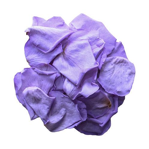 Lilac Rose Petals