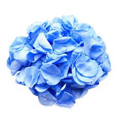 Preserved Marine Blue Rose Petals