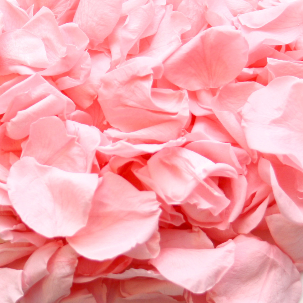 biodegradable confetti biodegradable wedding confetti biodegradable petals wedding confetti confetti moment pink roses petite roses