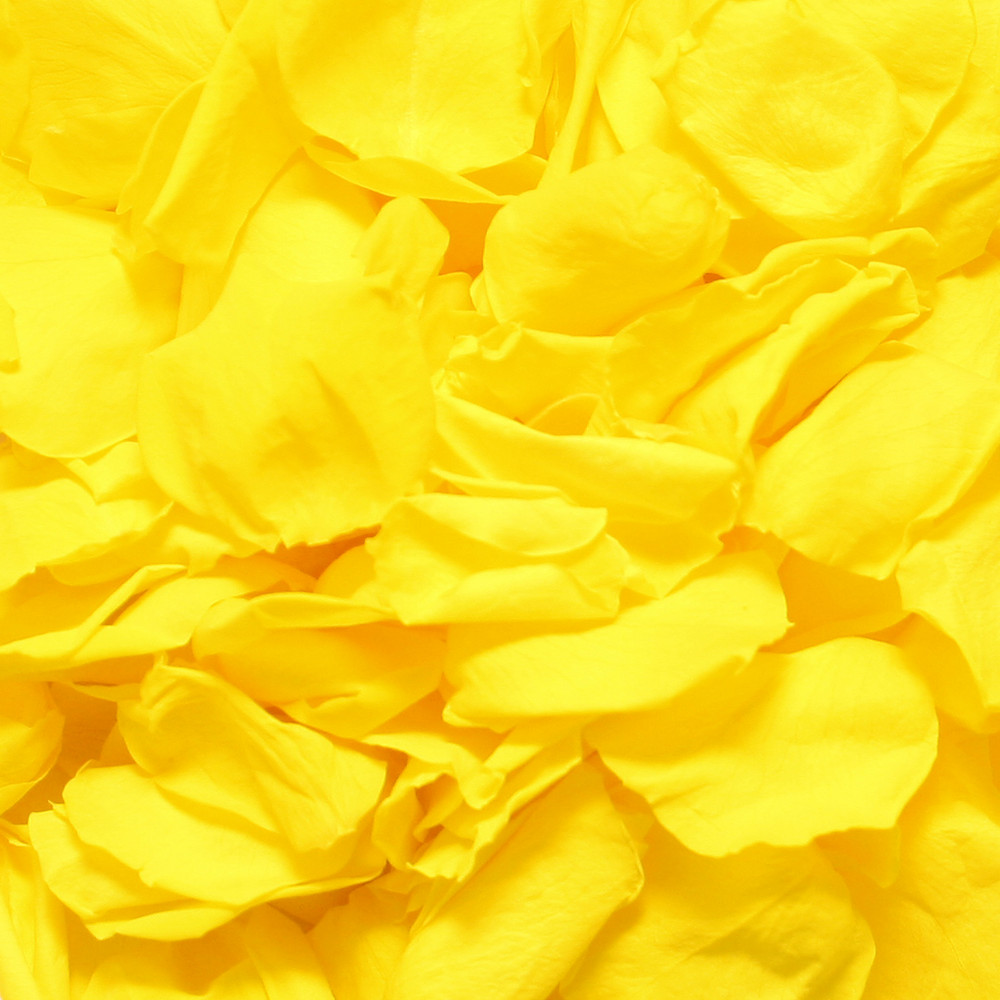 Biodegradable Yellow Rose Petals For Weddings