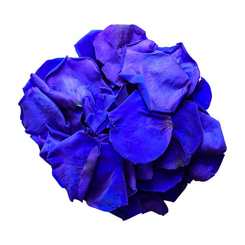 Dark Blue Rose Petals