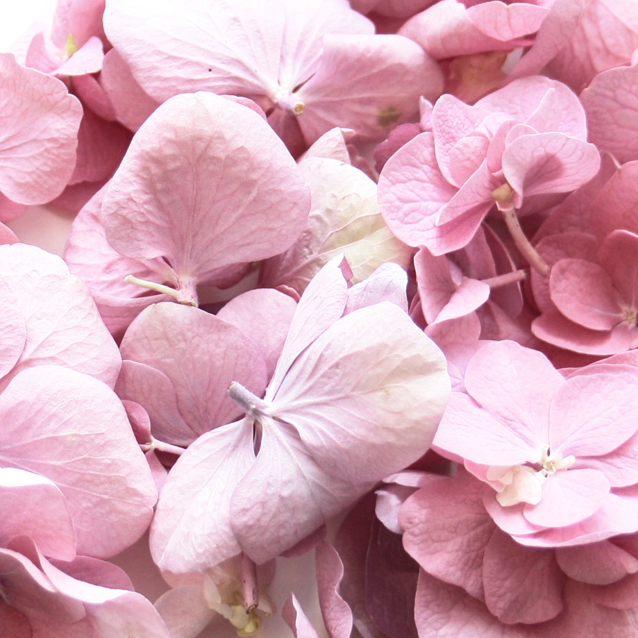 Double Pink Hydrangea Wedding Confetti