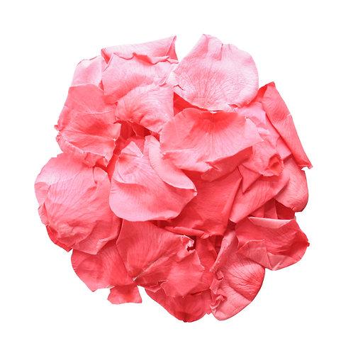 CRANBERRY ROSE PETALS - LARGE
