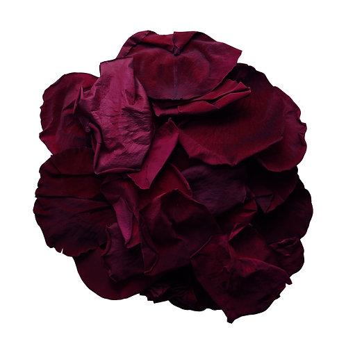 Wine Rose Petals