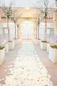 biodegradable wedding confetti,  biodegradable confetti, biodegradable petals, biodegradable confetti petals, biodegradable rose petals, rose petals, fresh petals, real petals, real petal confetti, confetti, eco friendly confetti, confetti, wedding confetti, walkway decor, aisle decor, roses for wedding decor, walkway decor petals