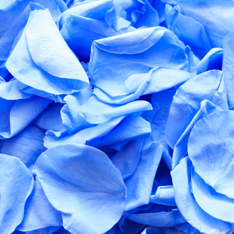 biodegradable confetti, wedding confetti, wedding decor, wedding petals, wedding confetti petals, confetti petals, wedding confetti petals wedding confetti petals biodegradable, biodegradable confetti, biodegradable petals, wedding confetti petals, confetti moment, blue confetti, rose petals, rose confetti, rose confetti petals, wedding confetti petals, confetti petals, confetti
