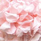 petitie rose petals petite roses wedding confetti biodegradable confetti biodegradable petals wedding petals wedding confetti petals wedding decor