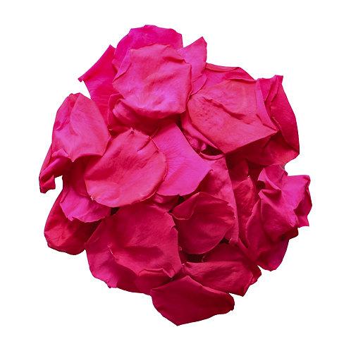Fuchsia Pink Rose Petals