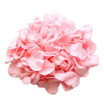 Preserved Baby Pink Rose Petals