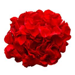 Preserved Red Rose Petals