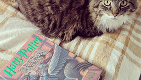 4 Favorite Pets in Books
