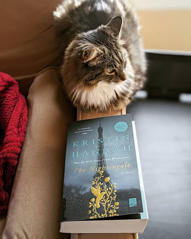 bookster jess the nightingale review cat photo