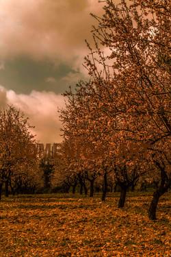 Limnatis village, Cyprus