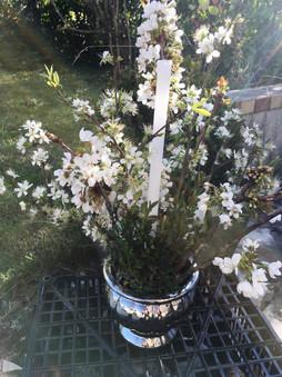 fleurblanche.jpg