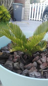 palmier.jpg