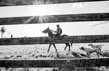 Gaucho_with_dogs_Sth_America_MICHAELCOYN