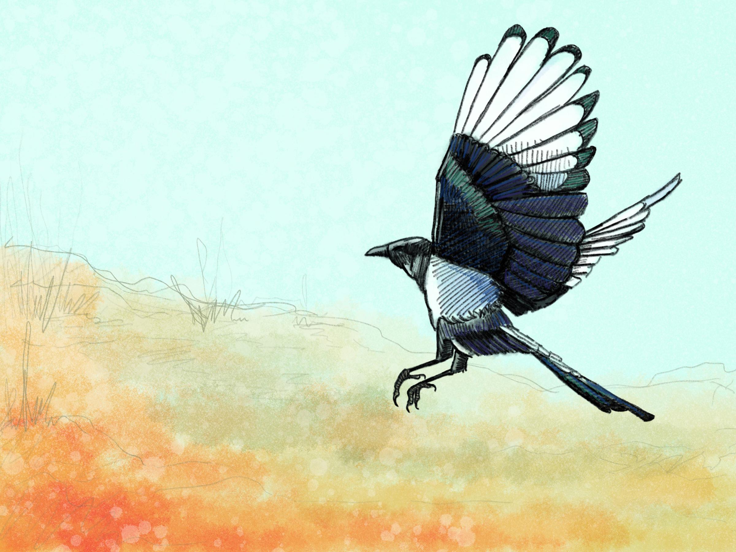 Winter Magpie