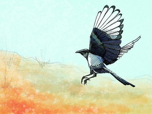 Winter Magpie- Framed