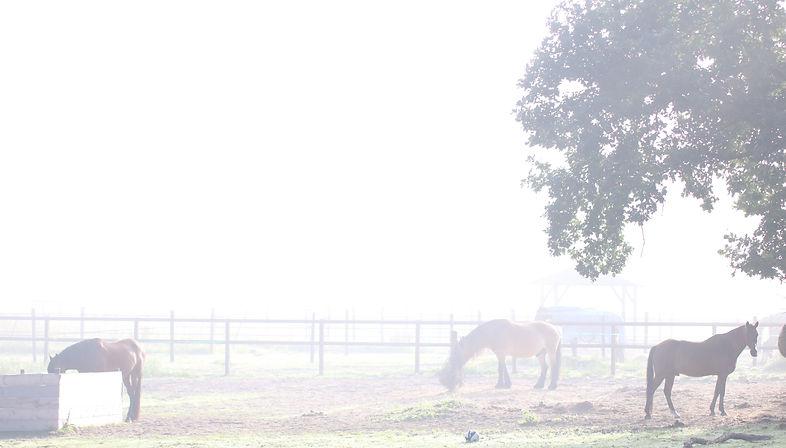 equine visions paddock paradise paarden paardvriendelijke huisvesting