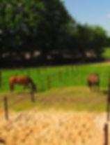 equine visions paarden paddock paradise paardvriendelijke huisvesting
